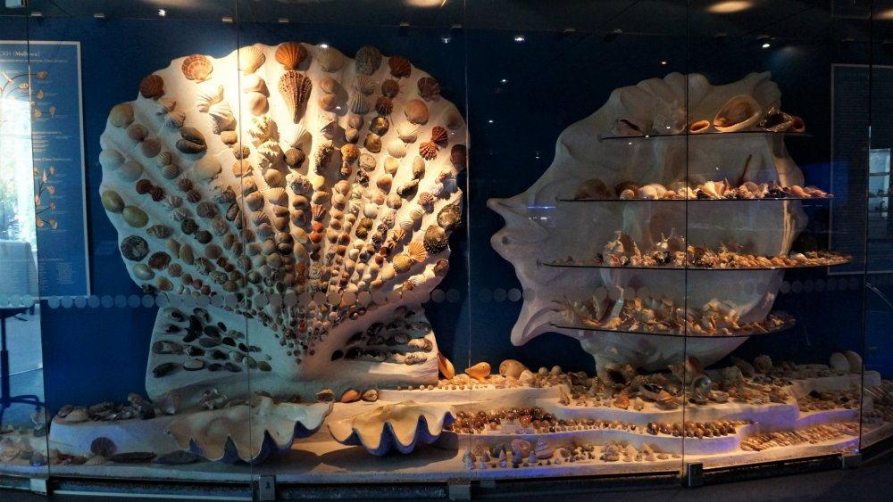 Музей мирового океана - ракушки